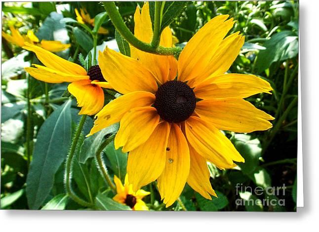 Elvira Ladocki Greeting Cards - Yellow Flower Greeting Card by Elvira Ladocki