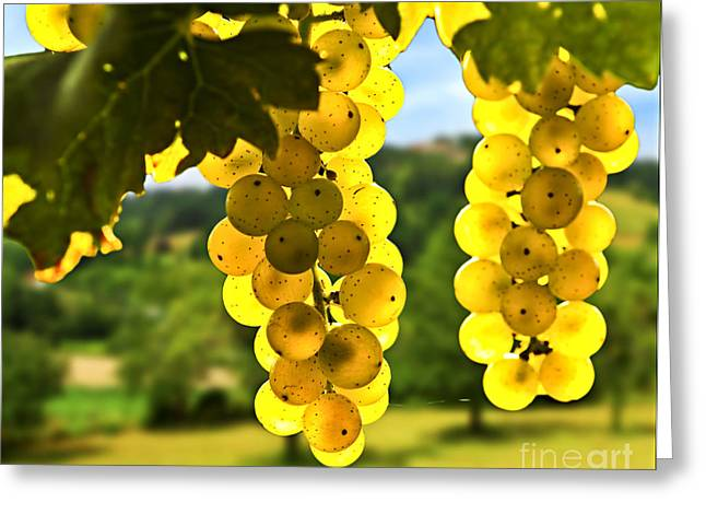 Vine Greeting Cards - Yellow grapes Greeting Card by Elena Elisseeva