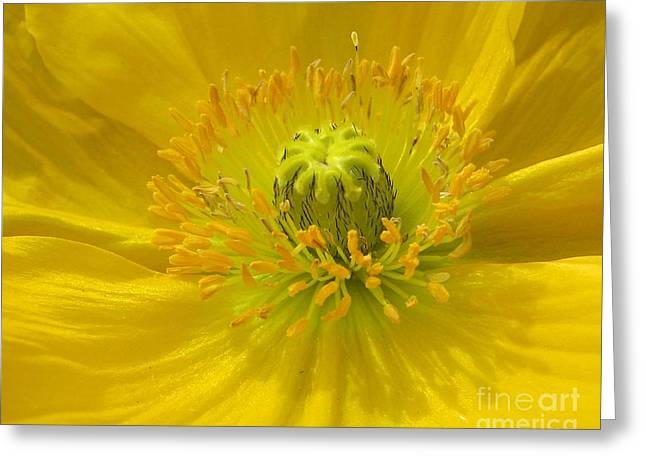 Yellow Macro Greeting Card by Chris Anderson