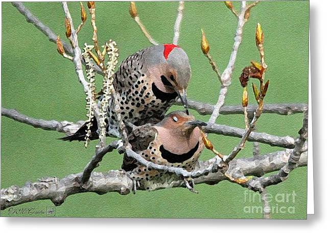 Morph Greeting Cards - Yellow-Shafted Northern Flickers Greeting Card by J McCombie