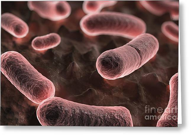 Y. Pestis Greeting Cards - Yersinia Pestis Black Plague Greeting Card by Science Picture Co