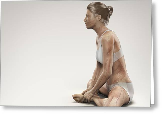 Physical Body Greeting Cards - Yoga Bound Angle Pose Greeting Card by Science Picture Co
