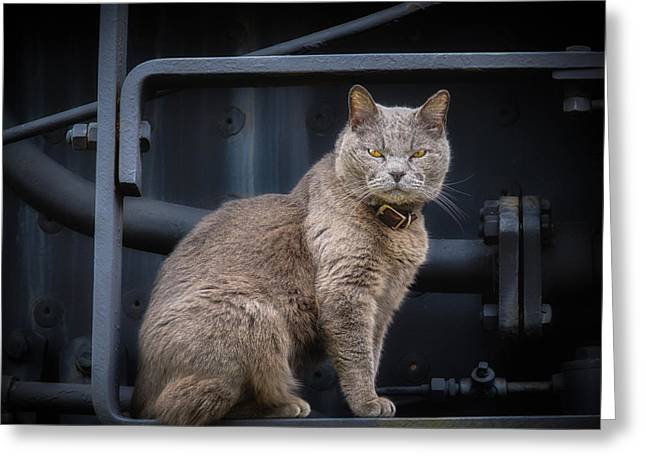 Confident Cat Greeting Cards - Stop Looking at Me  Greeting Card by James Barber