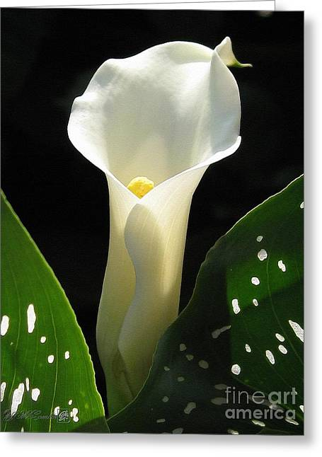 Jem Fine Arts Greeting Cards - Zantedeschia named Little Jimmy Greeting Card by J McCombie