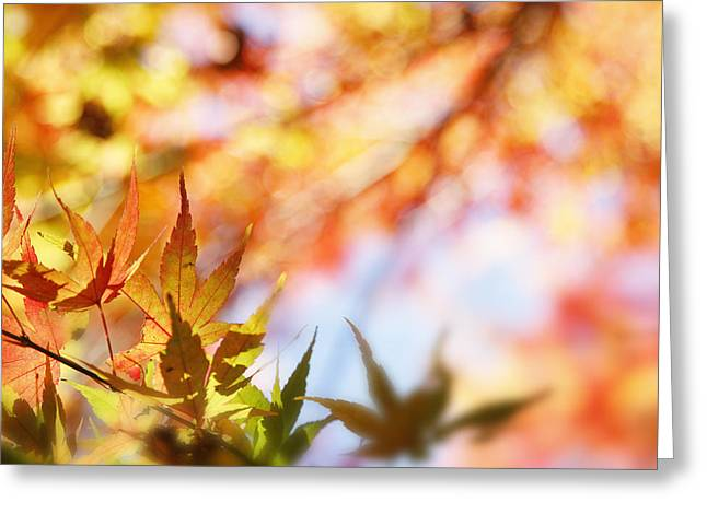 Maple Photographs Greeting Cards - Autumn  Greeting Card by Les Cunliffe