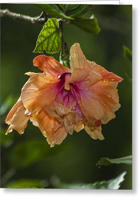 Blooms Greeting Cards - Costa Rica Flowers Greeting Card by Michel Rathwell