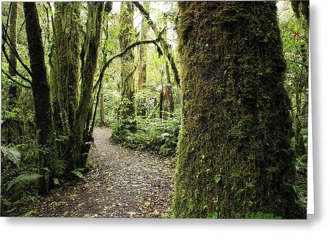 Outdoors Greeting Cards - Forest Greeting Card by Les Cunliffe