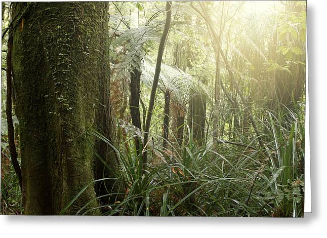 Forest Light Greeting Card by Les Cunliffe
