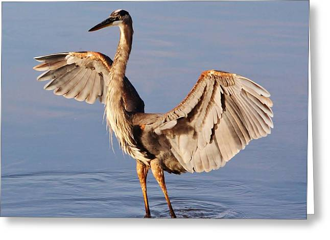 White Digital Greeting Cards - Great Blue Heron Greeting Card by Paulette Thomas