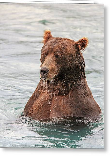 Grizzly Bears Also Called Brown Bears Greeting Card by Tom Norring