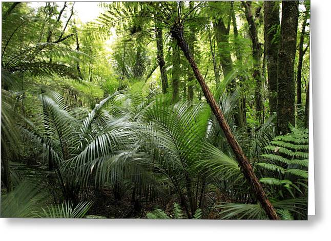 Jungle Greeting Card by Les Cunliffe