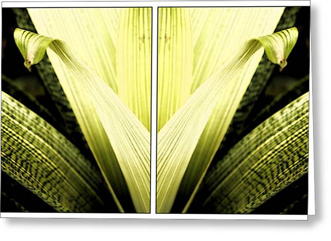 Rereading Greeting Cards - Nature Mirrors Greeting Card by Marcelo Del Rei