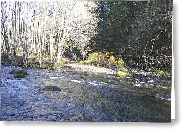 Salmon Creek Greeting Card by Tim Rice