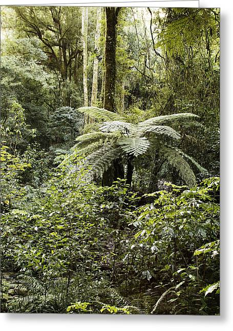 Tropical Photographs Greeting Cards - Tropical forest Greeting Card by Les Cunliffe