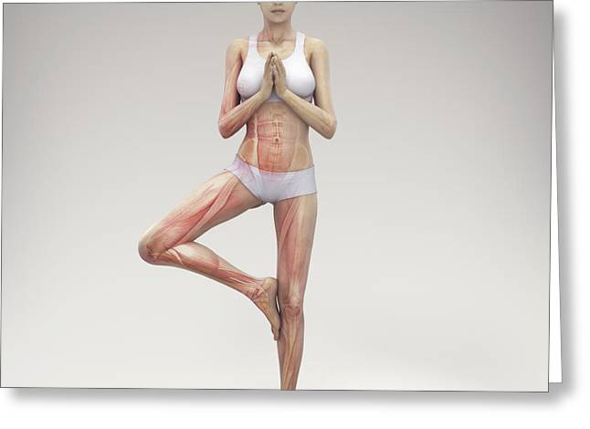 Physical Body Greeting Cards - Yoga Tree Pose Greeting Card by Science Picture Co