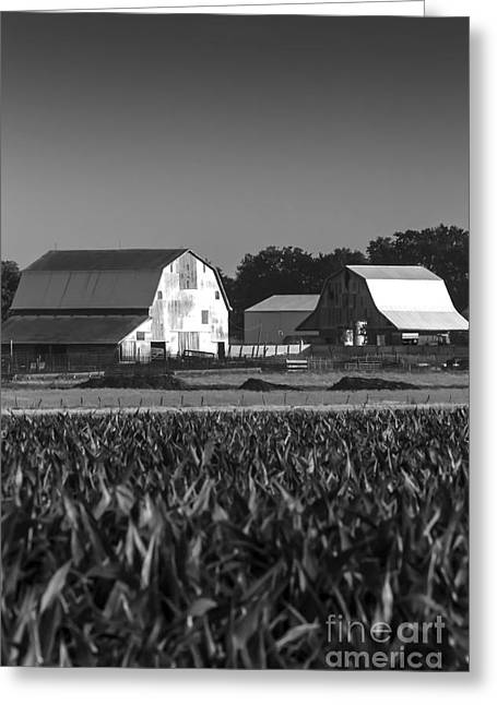 Barn Yard Greeting Cards - 2014 June Two Barns Early Morning BW Greeting Card by Rick Grisolano Photography LLC