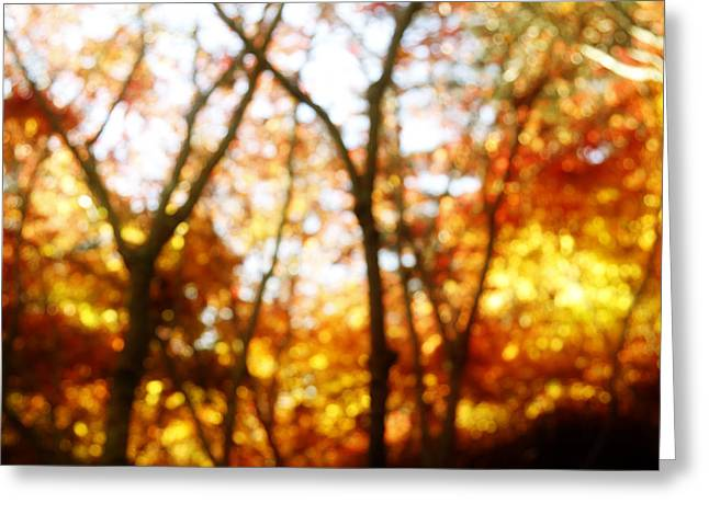 Leaf Change Greeting Cards - Autumn Greeting Card by Les Cunliffe