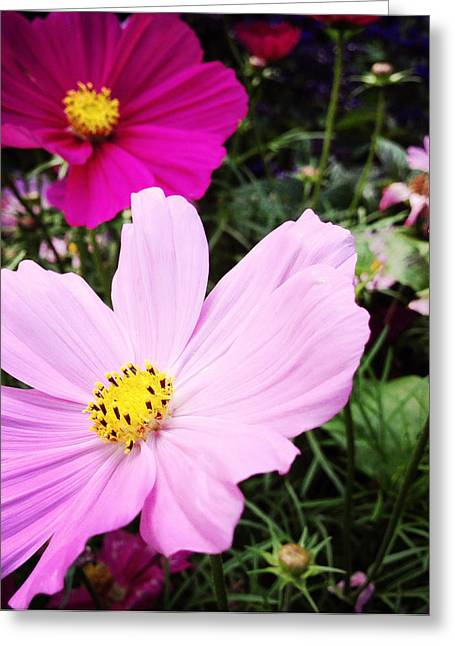 Pretty Flowers Greeting Cards - Flowers Greeting Card by Les Cunliffe