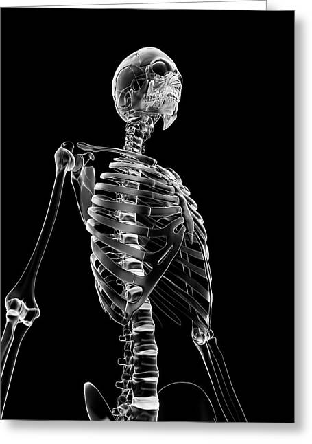 Human Skeleton Greeting Card by Sebastian Kaulitzki