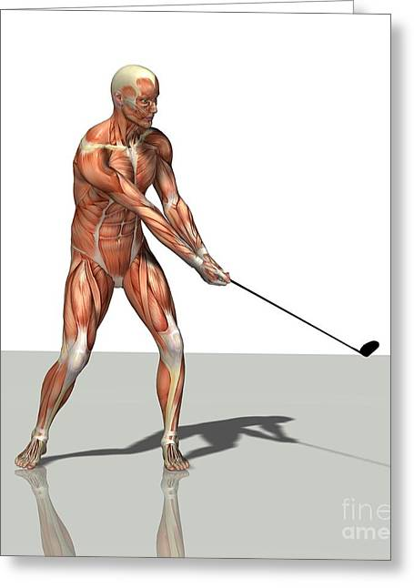 Pastimes Greeting Cards - Male Muscles, Artwork Greeting Card by Friedrich Saurer