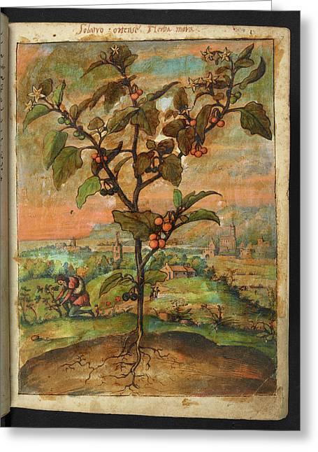 Medicinal Plant Greeting Card by British Library