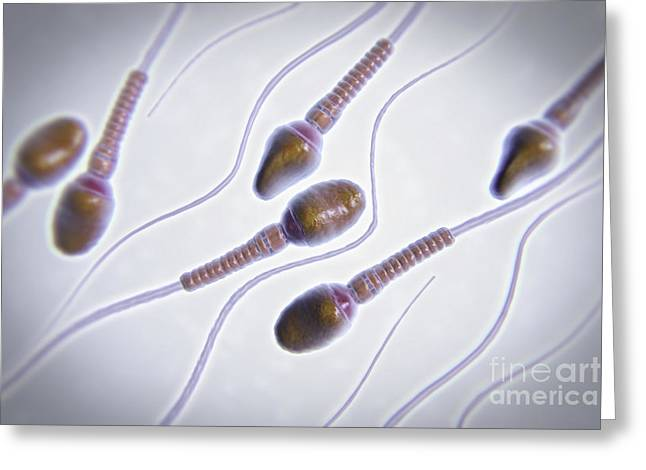 Mitochondrial Greeting Cards - Human Sperm Greeting Card by Science Picture Co
