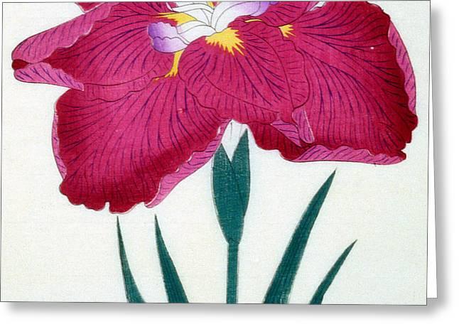 Japanese Flower Greeting Card by Japanese School