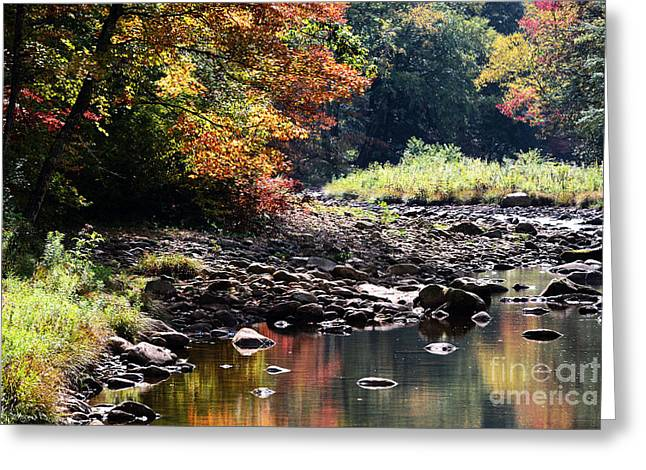 Confluence Greeting Cards - Williams River Autumn Greeting Card by Thomas R Fletcher