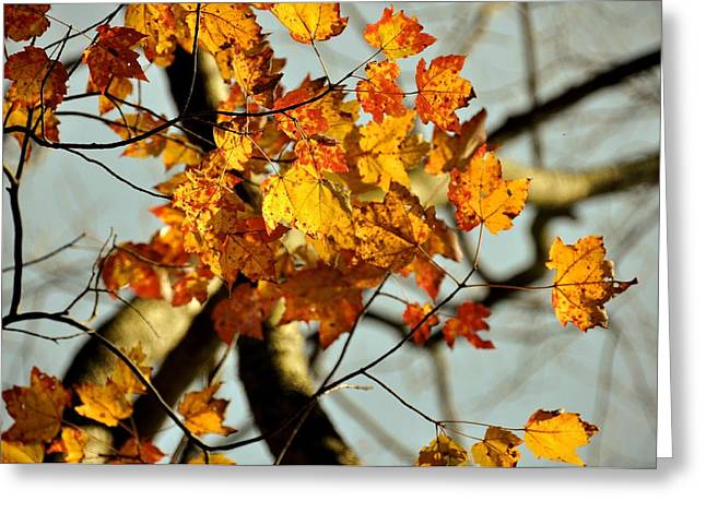 Red Fallen Leave Photographs Greeting Cards - 22nd of September Greeting Card by JAMART Photography
