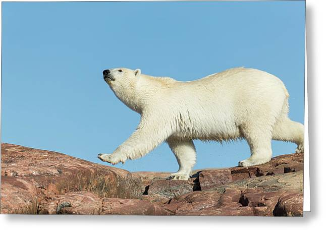 Canada, Nunavut Territory, Repulse Bay Greeting Card by Paul Souders