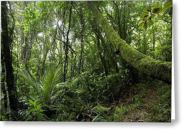 Environment Photographs Greeting Cards - Forest Greeting Card by Les Cunliffe
