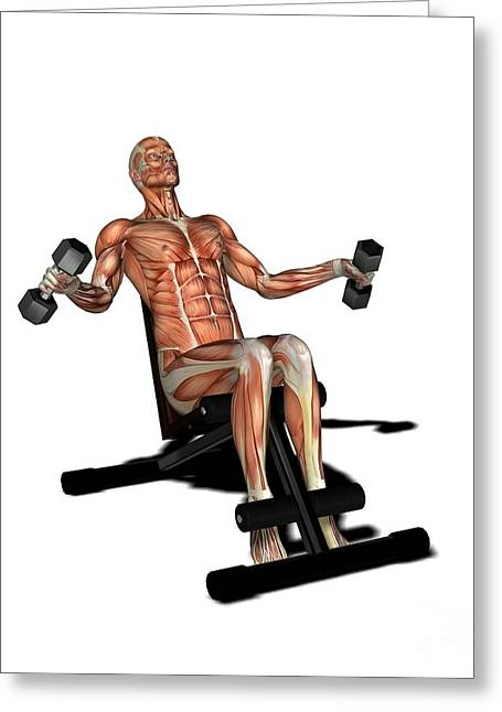 Conscious Greeting Cards - Male Muscles, Artwork Greeting Card by Friedrich Saurer