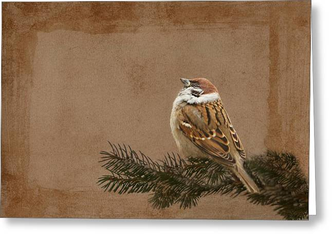 Sparrow Greeting Cards - Sparrow Greeting Card by Heike Hultsch