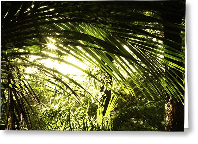 Humid Greeting Cards - Tropical forest Greeting Card by Les Cunliffe