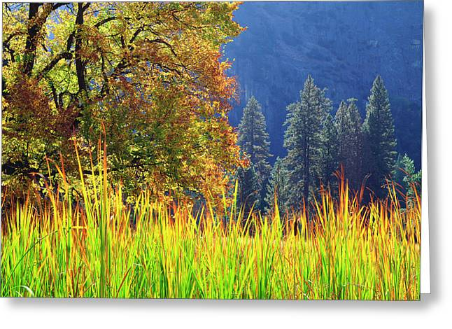 Usa, California, Yosemite National Park Greeting Card by Jaynes Gallery