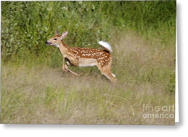 Spunky Greeting Cards - White-tailed Deer Greeting Card by Linda Freshwaters Arndt