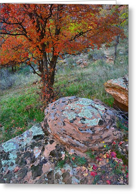 Lichen Covered Trees Greeting Cards - Zion National Park Greeting Card by Ray Mathis