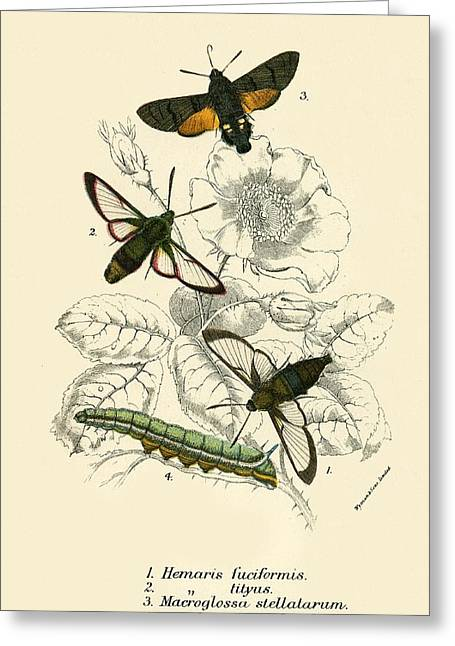 Butterflies Greeting Card by English School