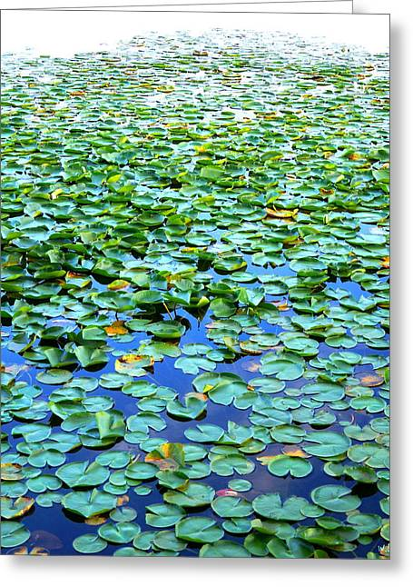 Indiana Lily Greeting Cards - Untitled Greeting Card by Wendell Lowe