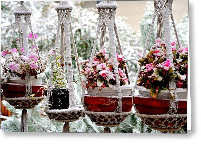 Hanging Planter Greeting Cards - Winter snow. Greeting Card by Oscar Williams