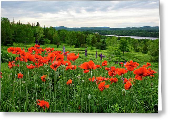 Canada, New Brunswick Greeting Card by Jaynes Gallery