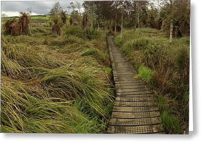 Swampland Greeting Cards - New Zealand Greeting Card by Les Cunliffe