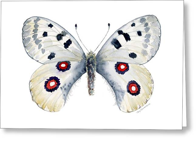 Background Paintings Greeting Cards - 28 Apollo Butterfly Greeting Card by Amy Kirkpatrick