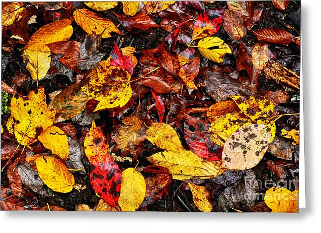 Fallen Leaf Greeting Cards - Autumn Monongahela National Forest Greeting Card by Thomas R Fletcher