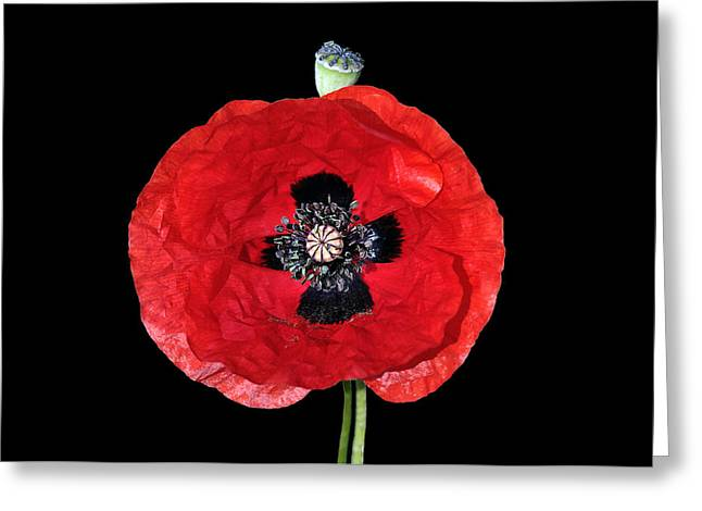 Greek Greeting Cards - Poppy flower Greeting Card by George Atsametakis
