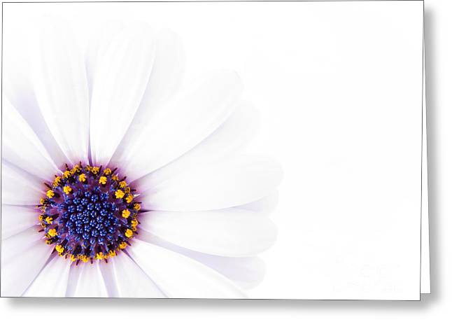 Overexposed Greeting Cards -  Beautiful White Flower in High Key Greeting Card by Jose Elias - Sofia Pereira
