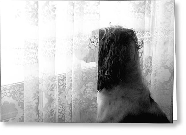 Dog In Window Greeting Cards - 3 30 Greeting Card by Angie Rea