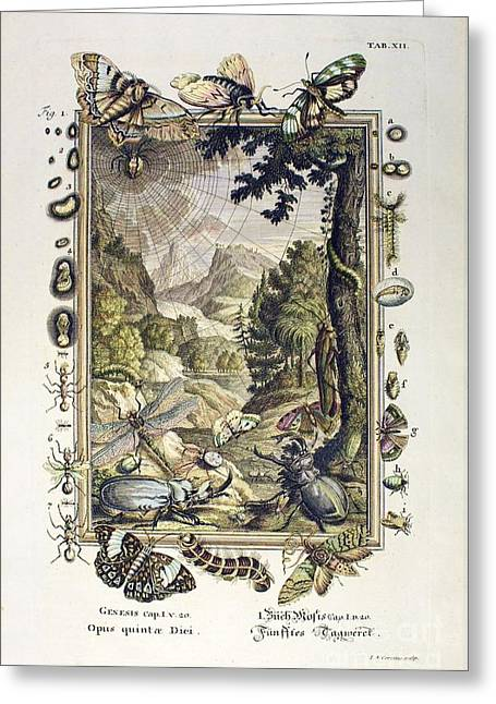 Creationism Greeting Cards - 5th Day Of Creation, Scheuchzer, 1731 Greeting Card by Paul D. Stewart