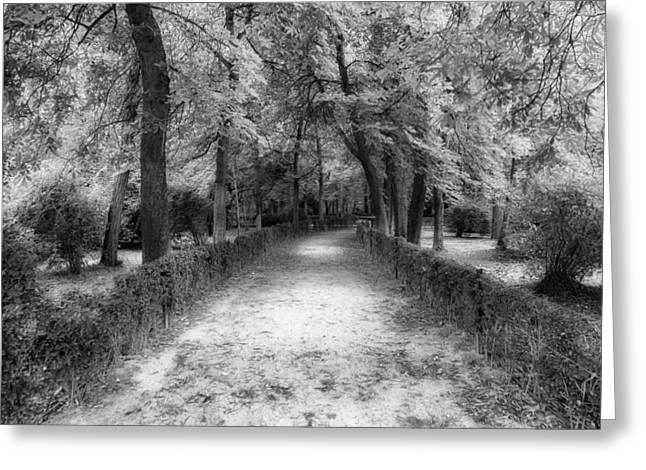 Hdr Landscape Greeting Cards - A Walk in the Park Greeting Card by Mountain Dreams