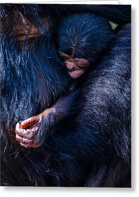Humanlike Greeting Cards - Akimbo Greeting Card by Brian Stevens
